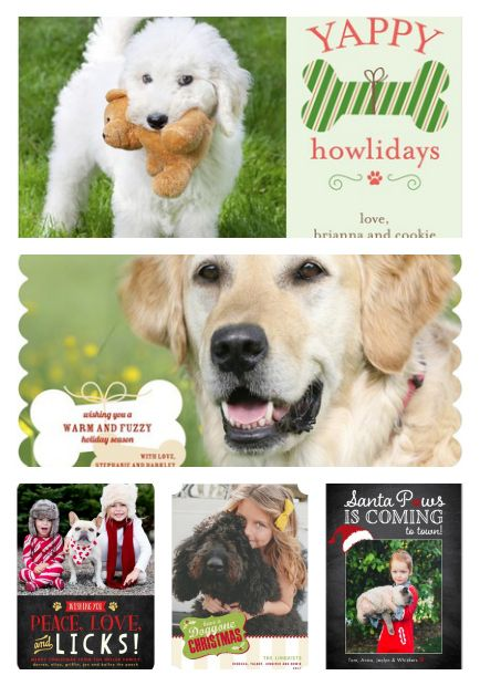 Perfect Pet Photos For Your Holiday Cards The Everyday Dog Mom
