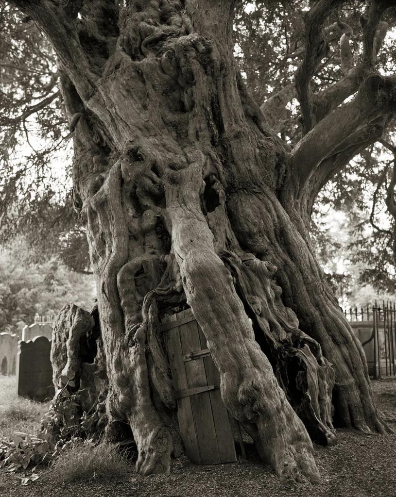 Portraits of Time © Beth Moon