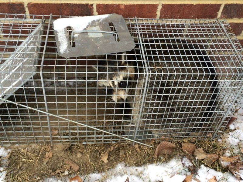 Bat removal and bat control removal company how to