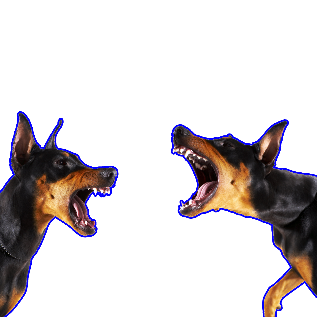 Pin By Wes So On Animaux Aggressive Dog Angry Dog Dog Tumblr
