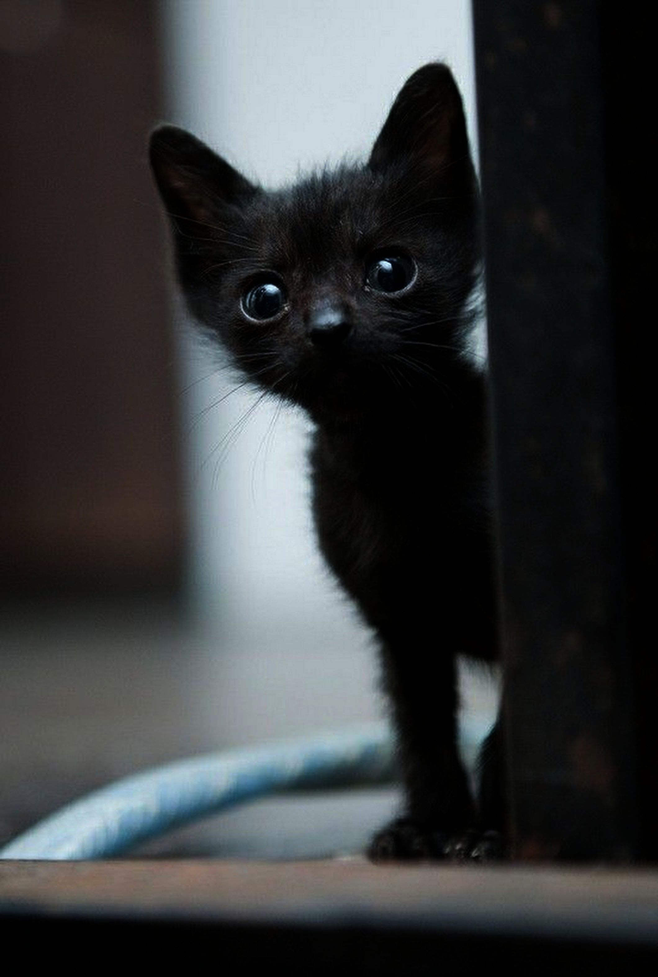 Kittens For Sale Near Me Kittens Throwing Up Kittens Cutest Cute Cats Animals Beautiful