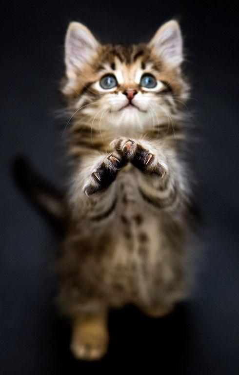 Katzenfotografie: Fragen und Antworten mit Josh Norem   - Animal Kingdom - #Anim...