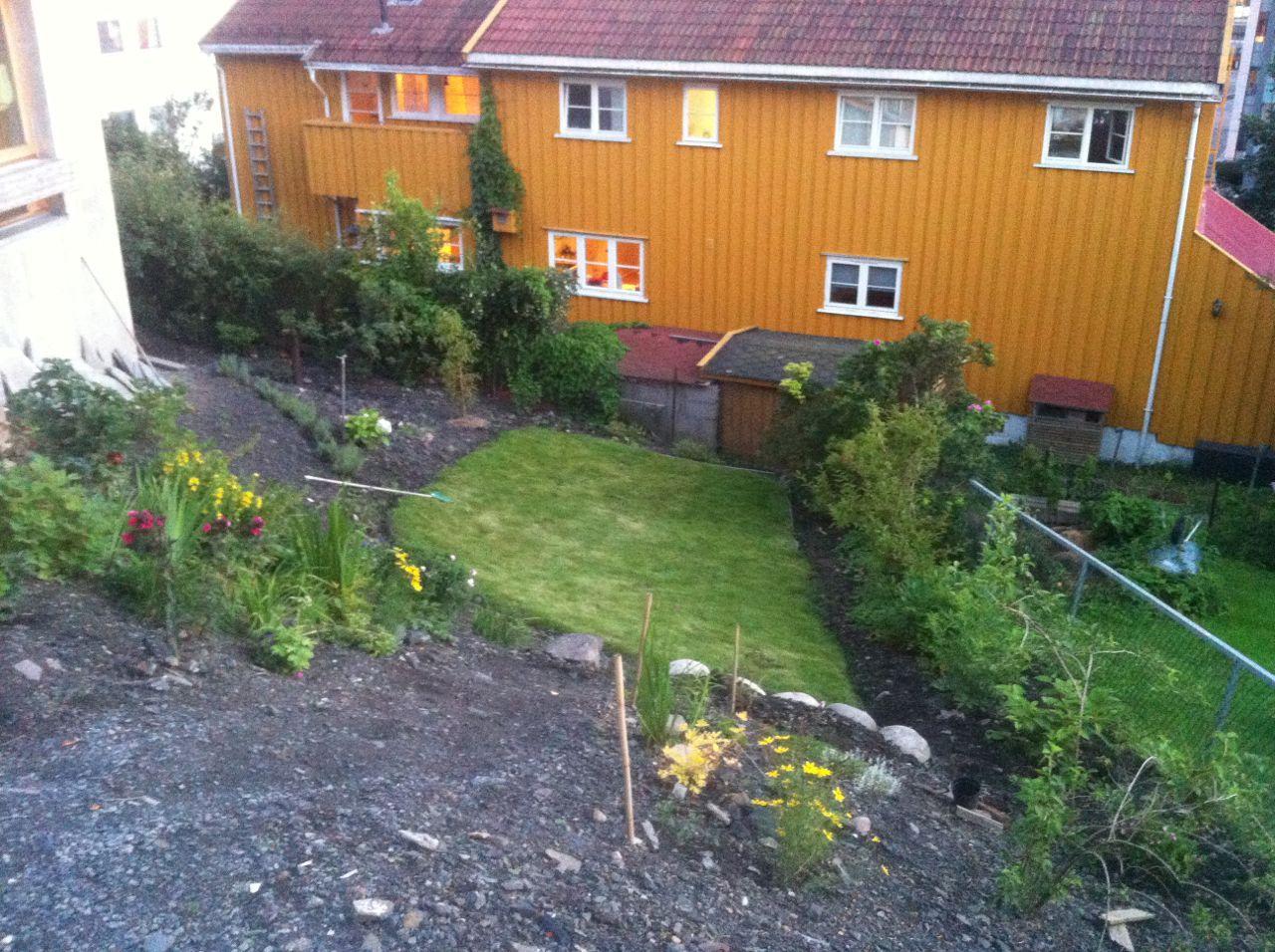Sånn ser hagen min ut nå. En stram, liten gressplen. Staudebed. Roser. Bær. Og noen høyvokste planter