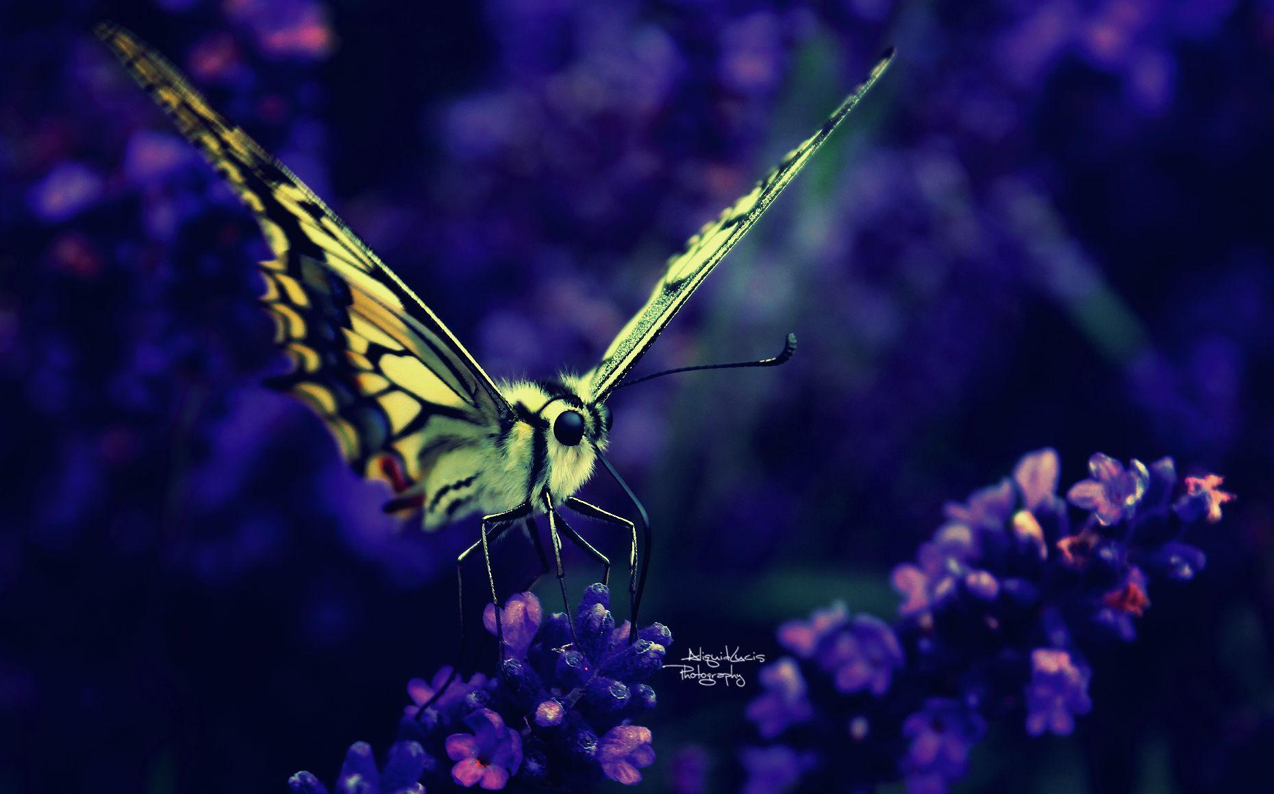 Delicate Beauty by AliquidLucis