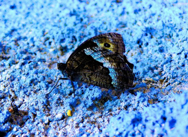 Momentsbook.com: Ευαισθησία και σιωπή! Πεταλούδα σε . . . γαλάζιο α...