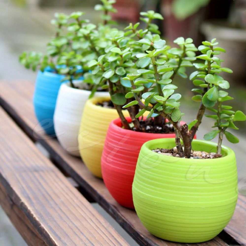 Colourful Mini Round Plastic Plant Flower Pot Garden Home Office