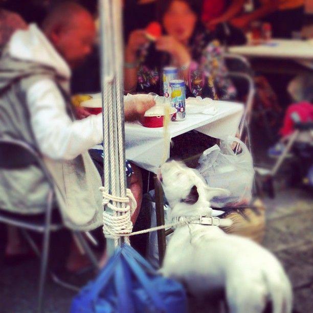 Nadie se puede resistir a los #noodles, ni siquiera los #perros - In Japan even dogs eat ramen ! #tokyo #japan #awesome #ramen #food #dog #funny #noodles