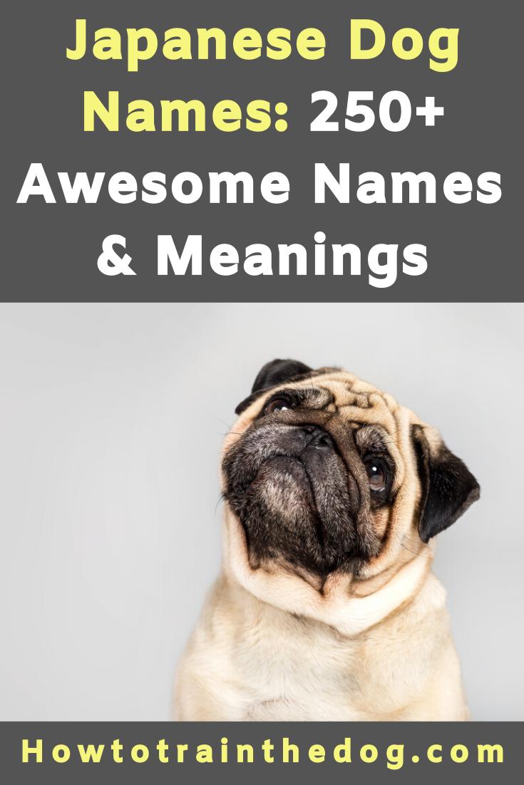 250 Japanese Dog Names Meanings Fuji Hiroshi Sushi More Dog Names Japanese Dogs Names With Meaning