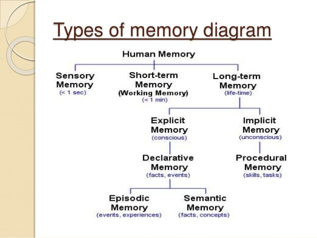 The characteristics of different types of human memory in psychology