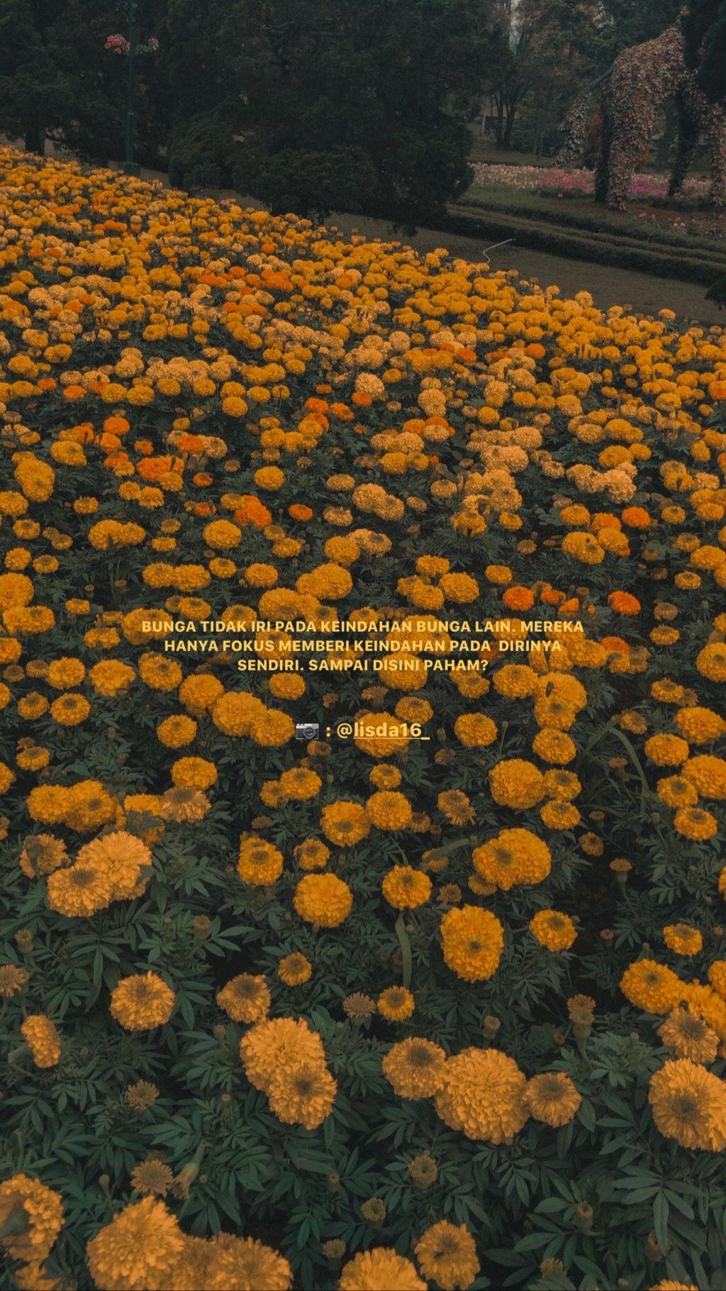 Quotes Bunga