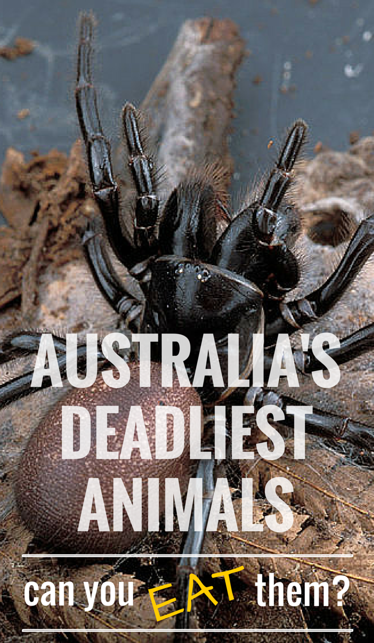 5 Deadliest Australian Animals Can You Eat Them? Deadly