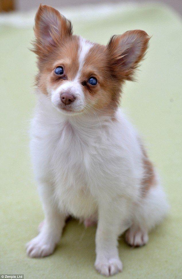 The Half Huskies Pets Cute Animals