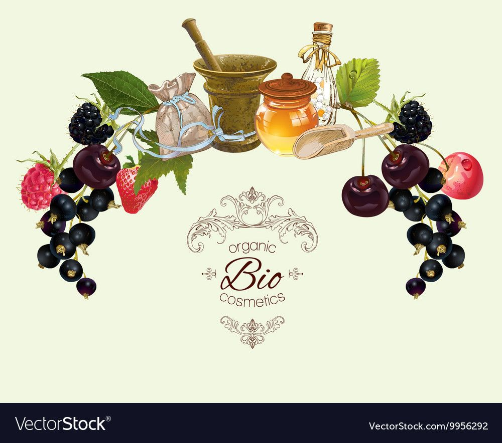 Fruit and berry banner vector image on Макетирование