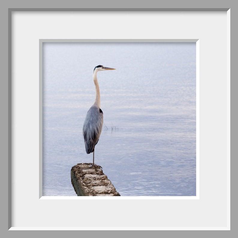 Great Blue Heron Photo Coastal Bird Wall Art Blue Gray Etsy Heron Photo Bird Wall Art Blue Heron