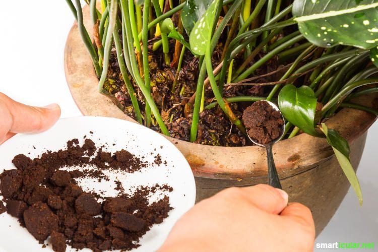 8 Anwendungen Fur Kaffeesatz Im Garten Bitte Nicht Wegwerfen Mit Kaffeesatz Kannst Du Auf Naturliche Weise Dungen Schadlinge Vetreiben Und Mulchen Bahce
