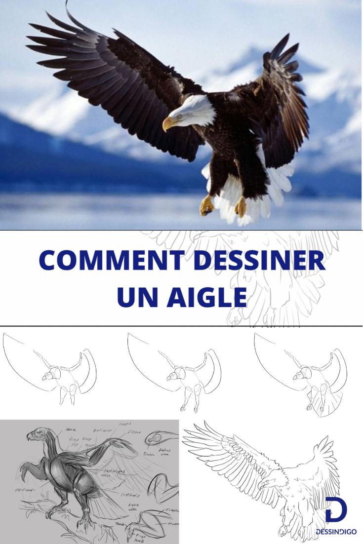 Comment Dessiner Un Aigle Dessin Aigle Aigle Image A Dessiner
