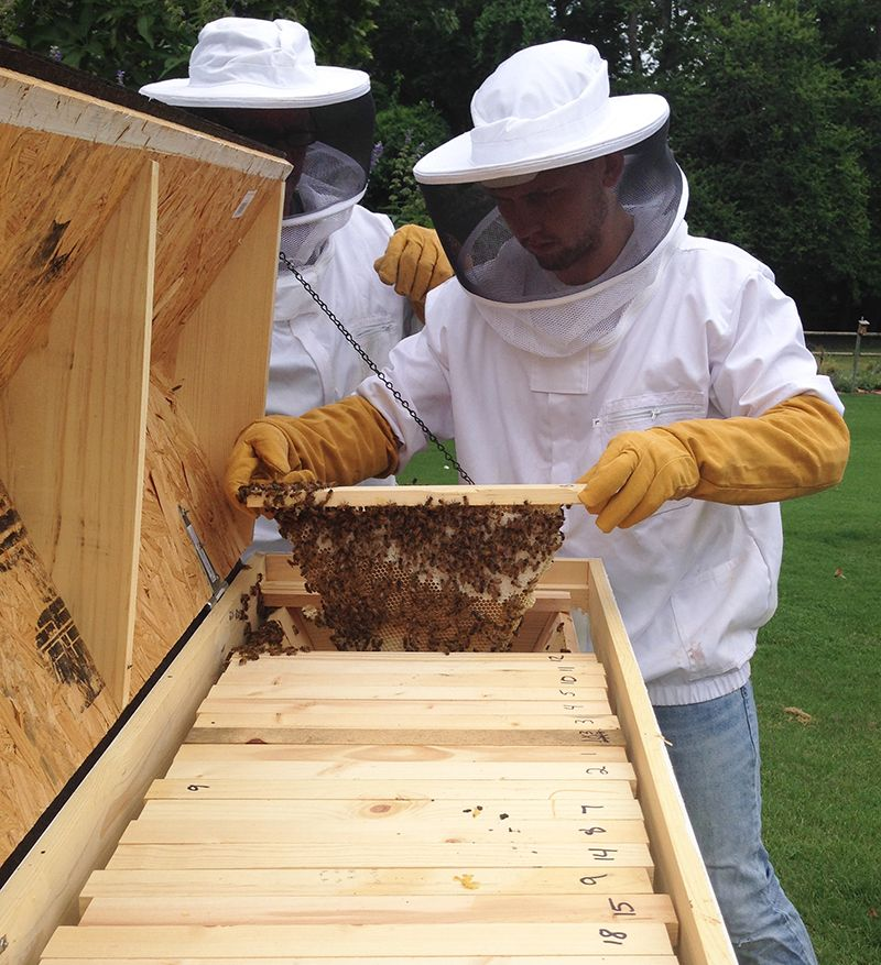 Top-bar hives get their name from the wooden bars that the bees build comb off of.