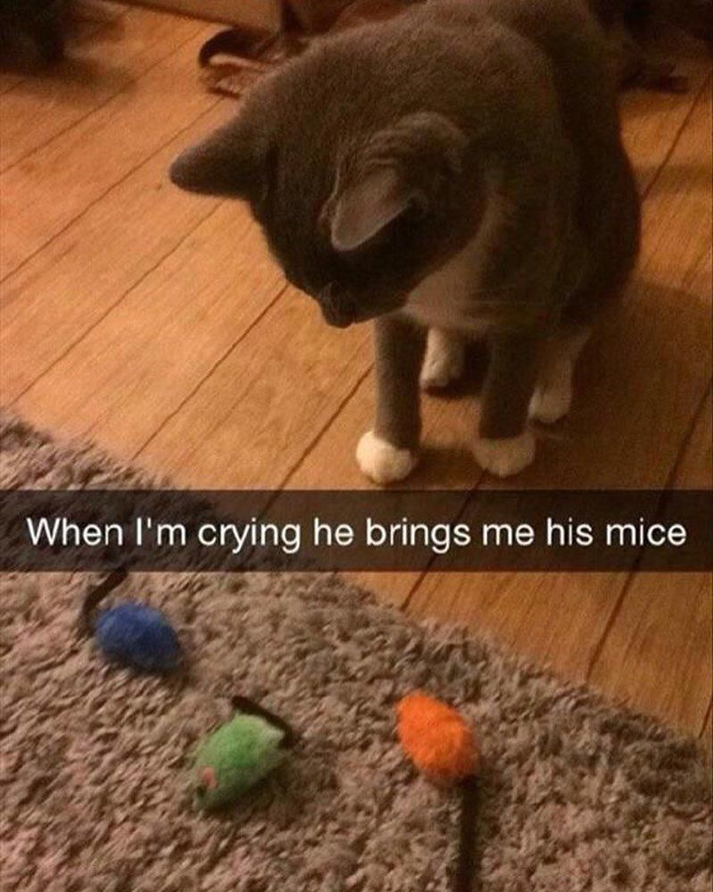 cat memes Cute animals