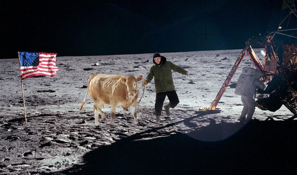 Robert Pattinson cow meme Google Search Cow meme