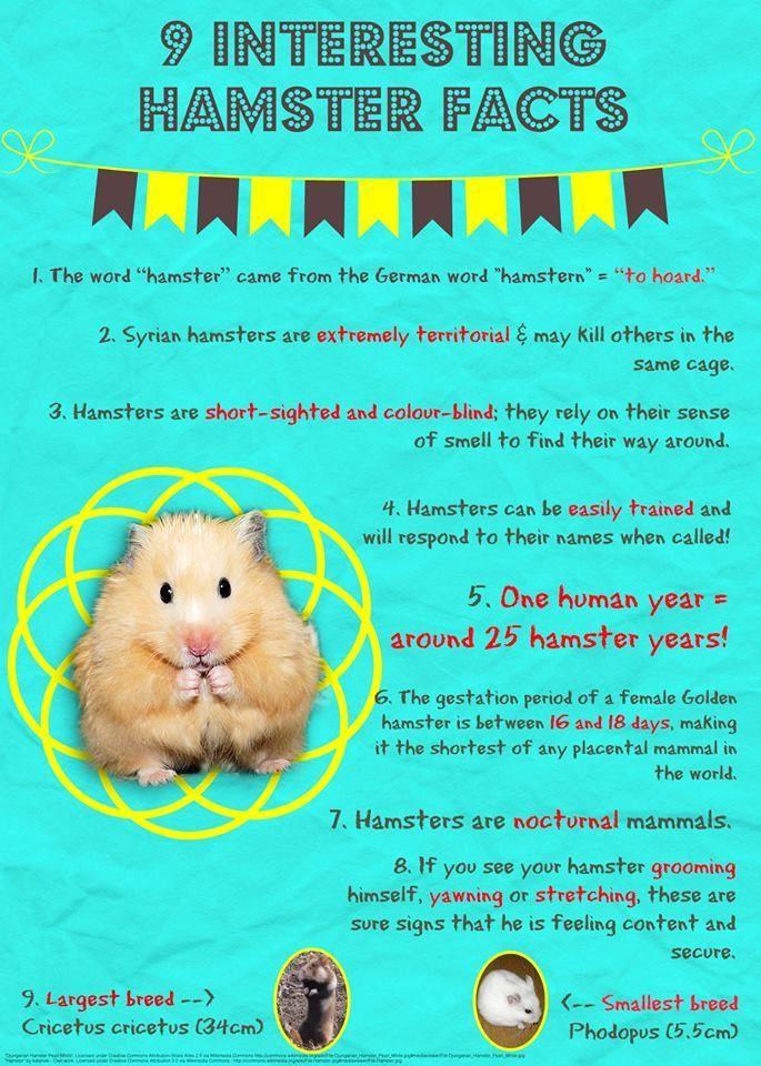 Petworld Direct Hamster Life Hamster Breeds Dwarf Hamster Care