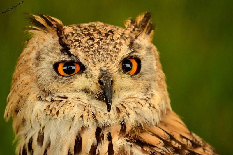 Eagle eyes Eagle eye, Eagle, Eyes