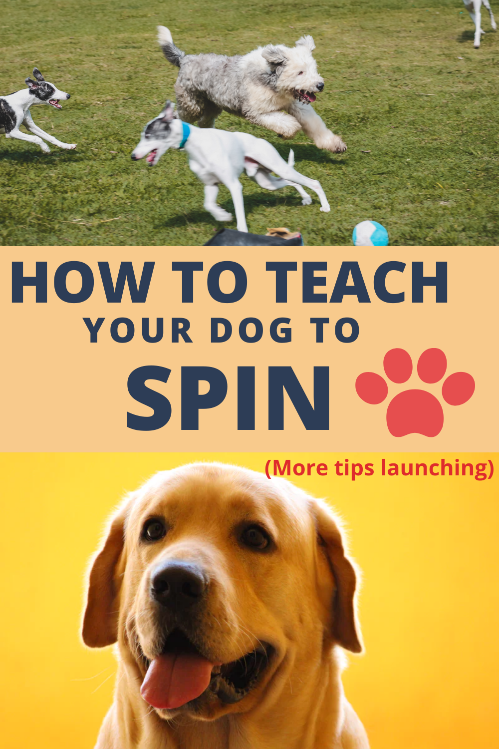Get A Load Of That Dog : Training!, Spin!, Steps, Revealed), Dogs,, Training
