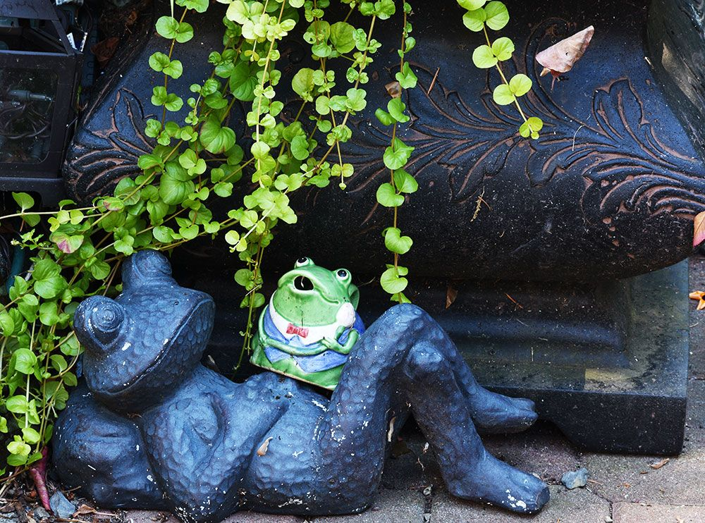 #garden #decoration #frog  The big pot is my gold fish pond - creeping jenny plant growing in it as a water plant.  The big frog came from Fred Meyers, the small frog was a thrift store find.