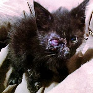 This Kitten Lost An Eye But Will Never Lose His Family Touching Animal Stories Cats And Kittens Dogs And Puppies