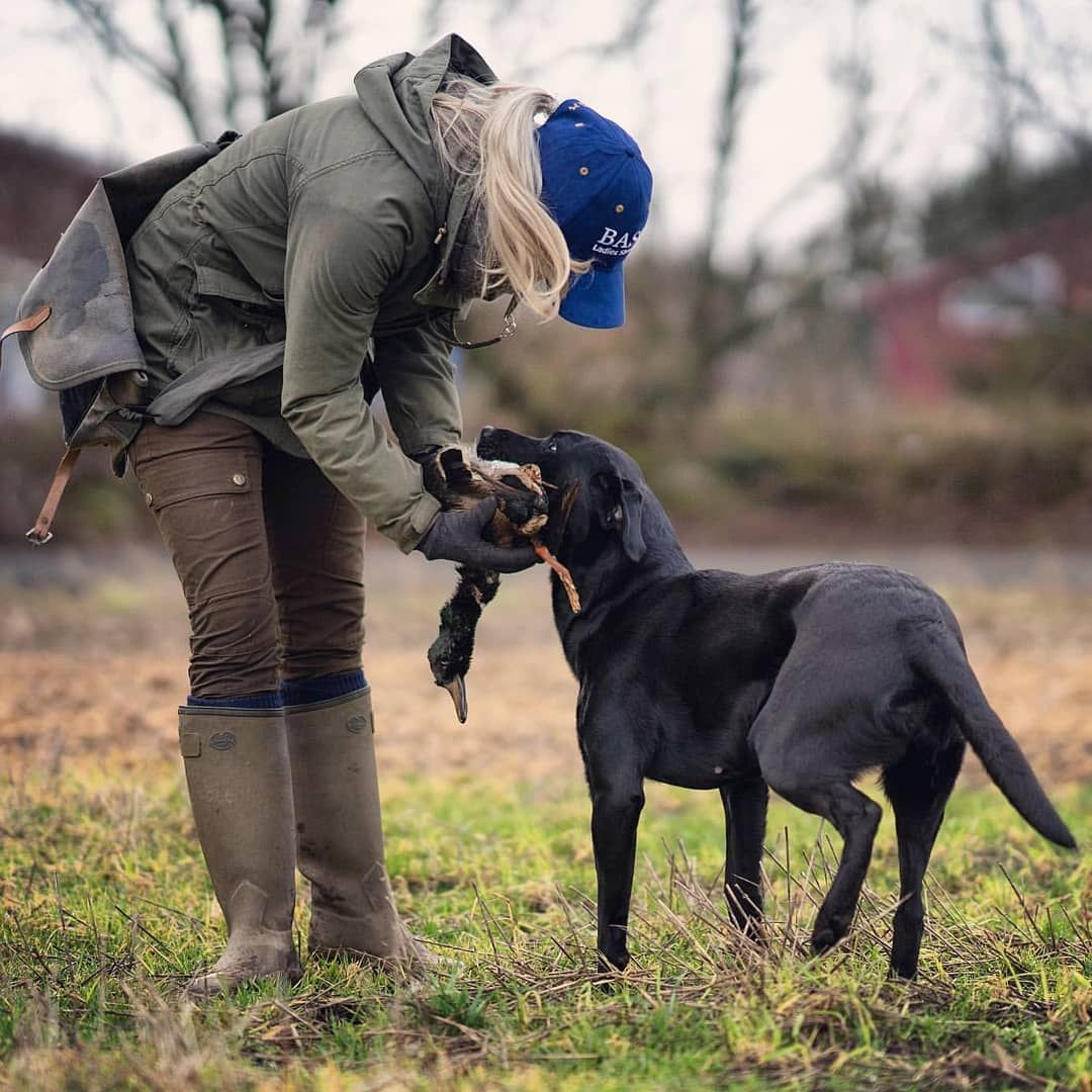 Pin On Dogs Training