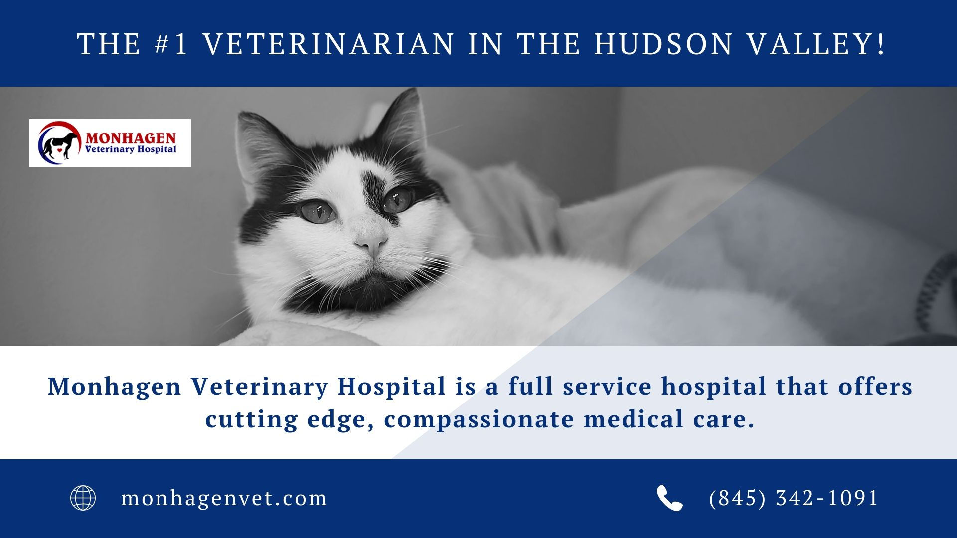 Monhagen Veterinary Hospital Is Your Best Pet Vet In Middletown That Offers Compassionate Medical Care To Keep Pet Vet Veterinary Hospital Pet Health