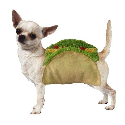 taco chihuahua - Keau0027s costume - simple and sooo cute ! Halloween Costumes For DogsSmall ...  sc 1 st  Pinterest & taco chihuahua - Keau0027s costume - simple and sooo cute !   Chihuahuas ...