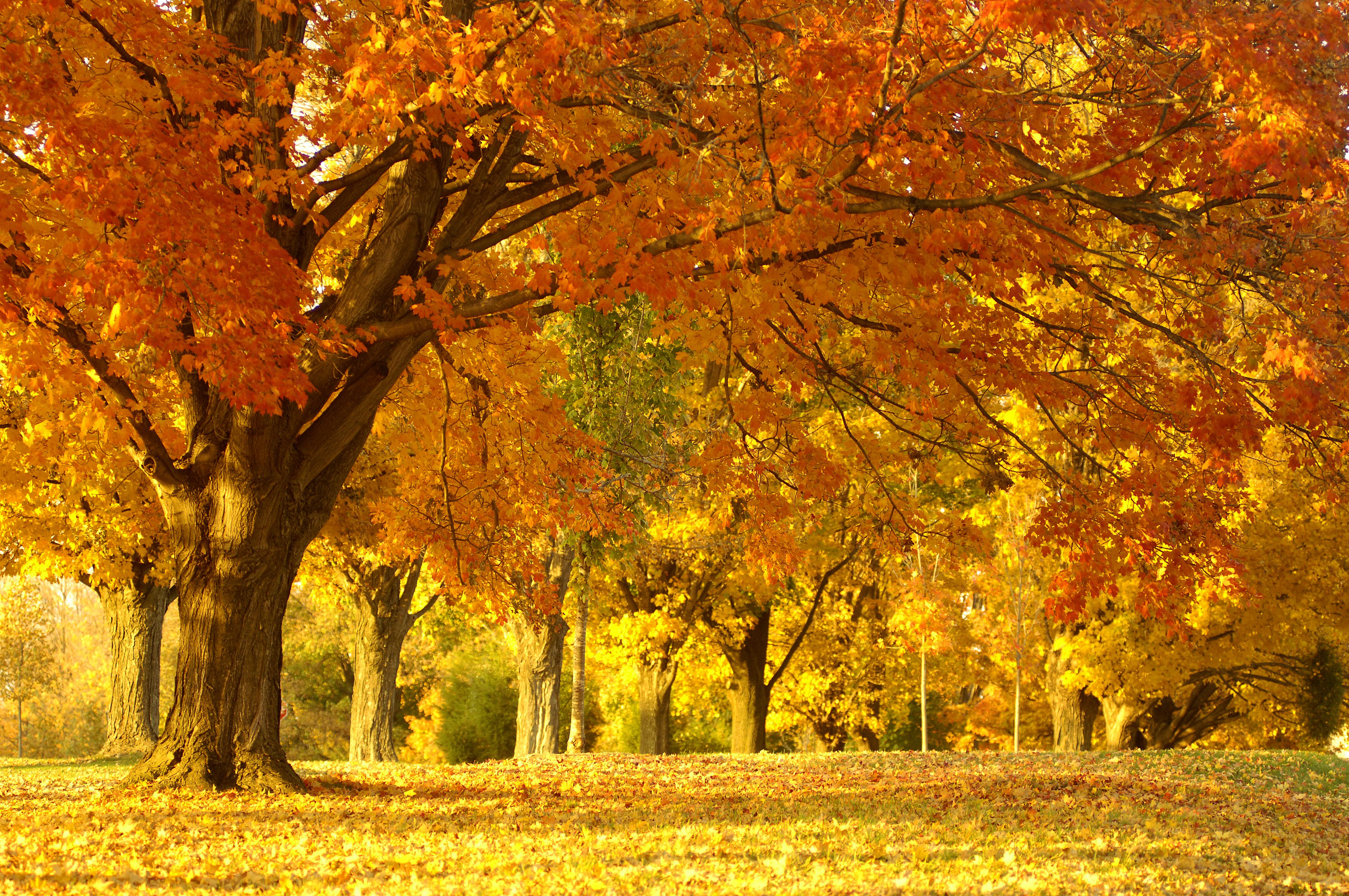 Give Your Desktop a Taste of the Fall Season with These
