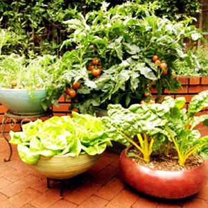 Gifts Vegetable Seed Plant Nursery