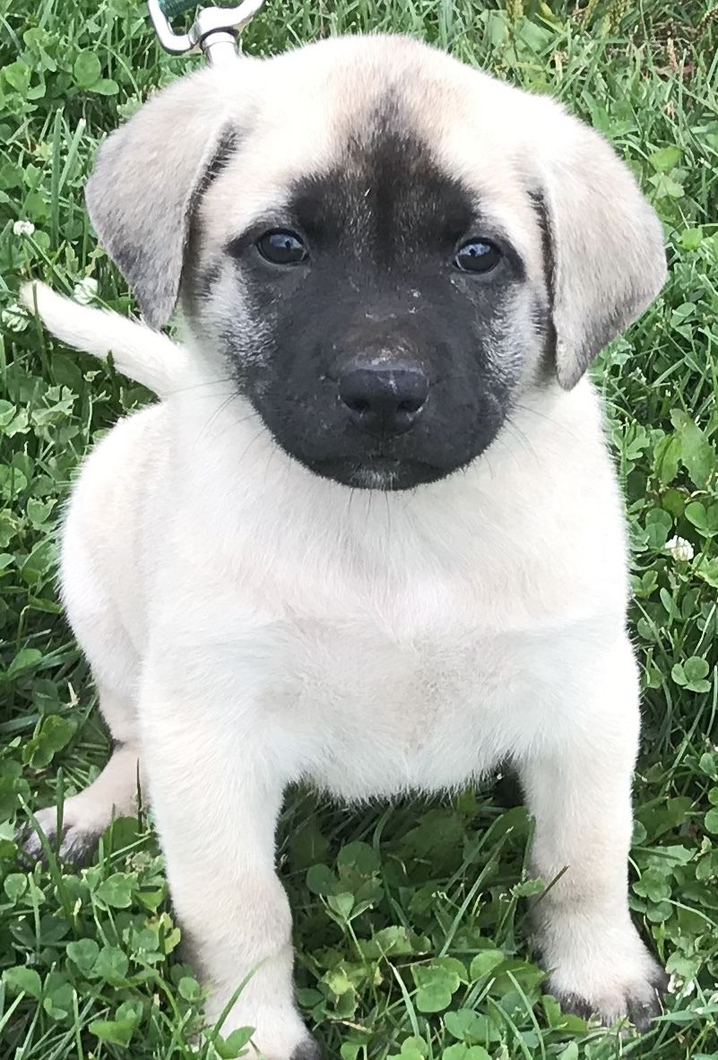 Adopt Pudgy on Pudgy, Pets, Puppies