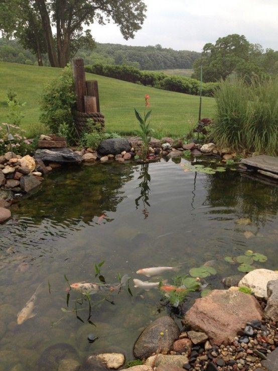 Bassin de jardin de forme asymétrique, graminées dornement ...