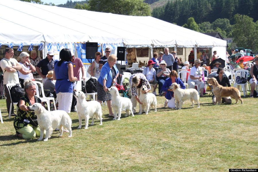 Golden Retriever Festival Is Everything You D Expect And More