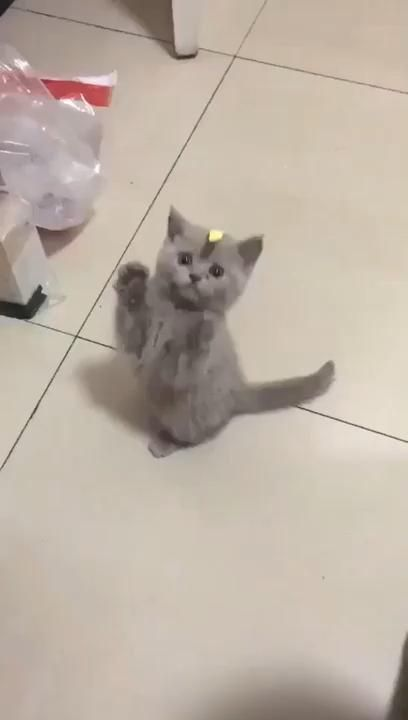 Kitten Is Confused �cute cats
