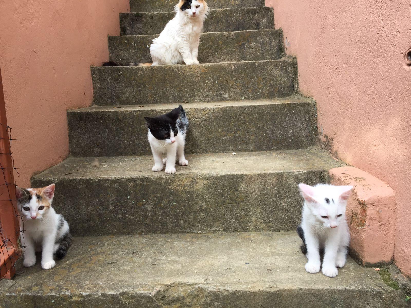 Pin On Cute Gatitos