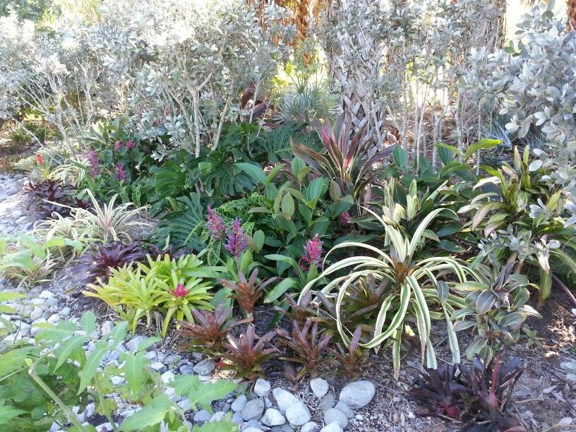 Naples Botanical Garden Botanical gardens, Garden, Plants
