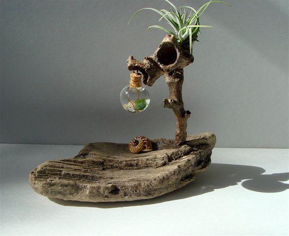 Ecosphere Driftwood Marimo Moss Ball Zen Tiny Terrarium F by MyZen