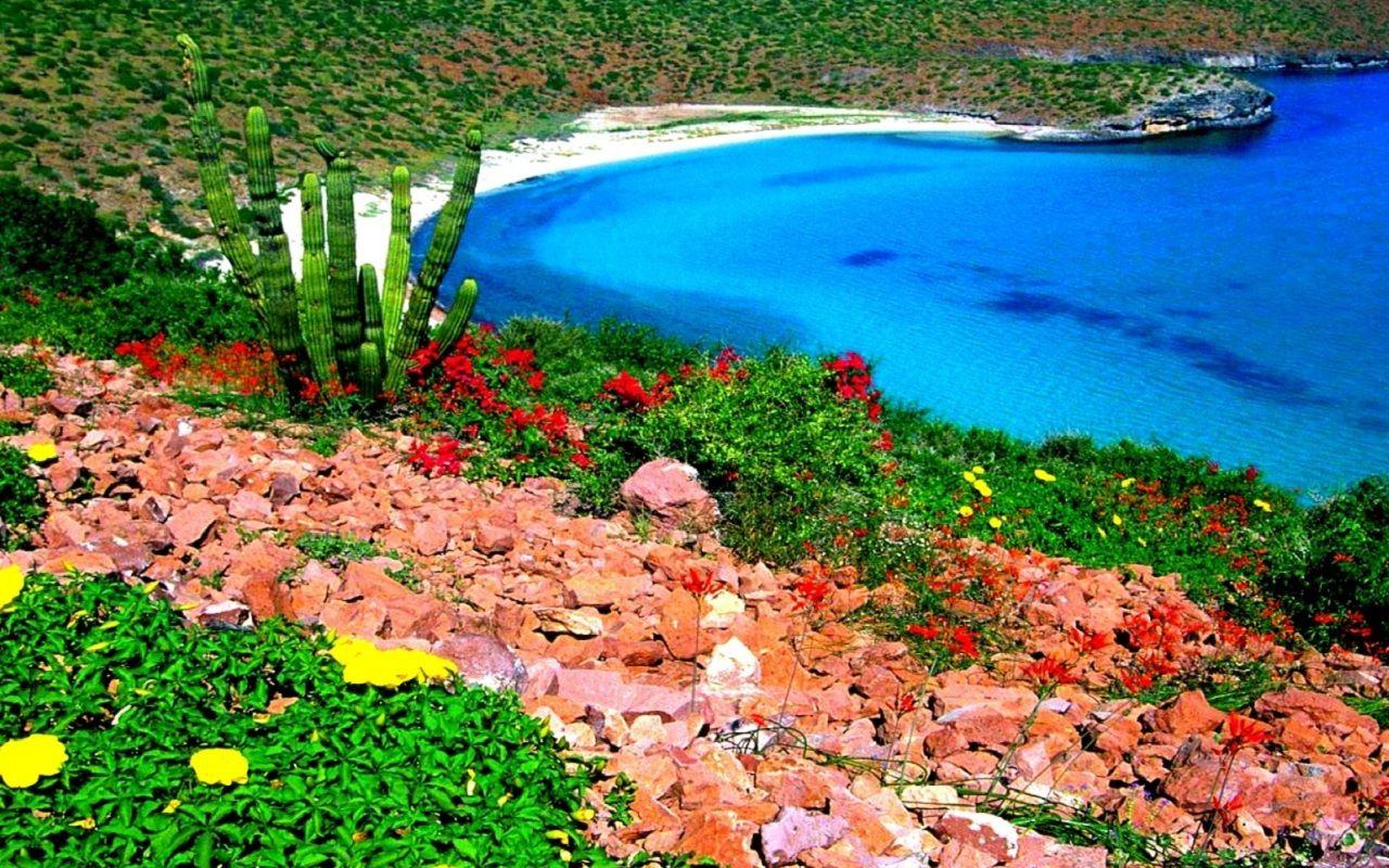 Deniz Kenarında Tepedeki Rengarenk çiçekler Masaüstü Arkaplan