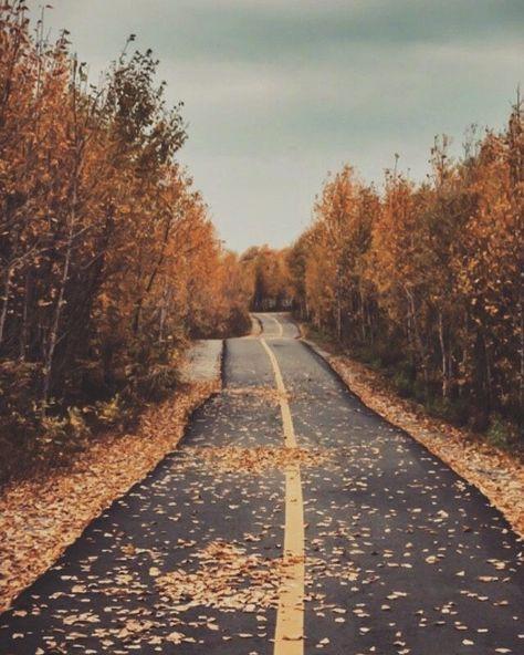 "Photo of 🕸 𝓽𝓱𝓮 𝓱𝓪𝓻𝓿𝓮𝓼𝓽 𝓶𝓸𝓸𝓷 𝔀𝓲𝓽𝓬𝓱 🕸 en Instagram: ""🍂🍁🌲 • • • #autumn #fall #leaves"""