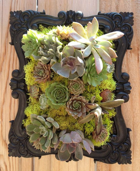 vertical succulent garden in black scroll frame