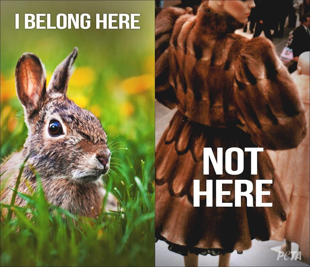 why wear dead animals; killed for vanity? #vegan