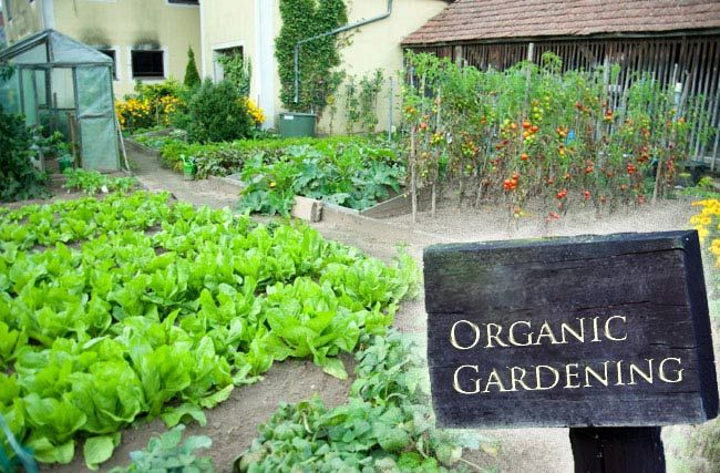 Organic Gardening Is Trendy In Florida With Images Organic