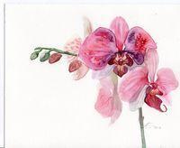Originales Aquarelle Roses Orchidees Fleurs Par