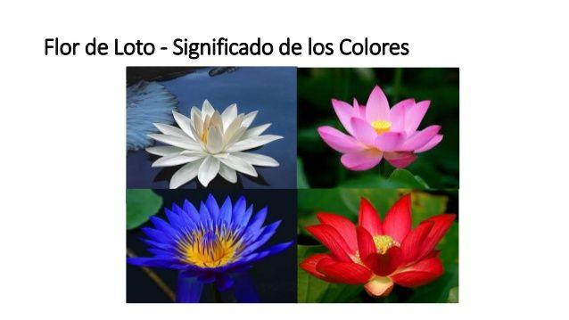 Significado De La Flor De Loto En El Oriente La Flor De Loto