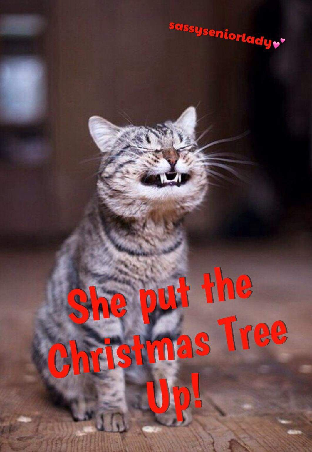 Pin by Sheri Powell on Christmas Cheer | Funny, Animals, Cats