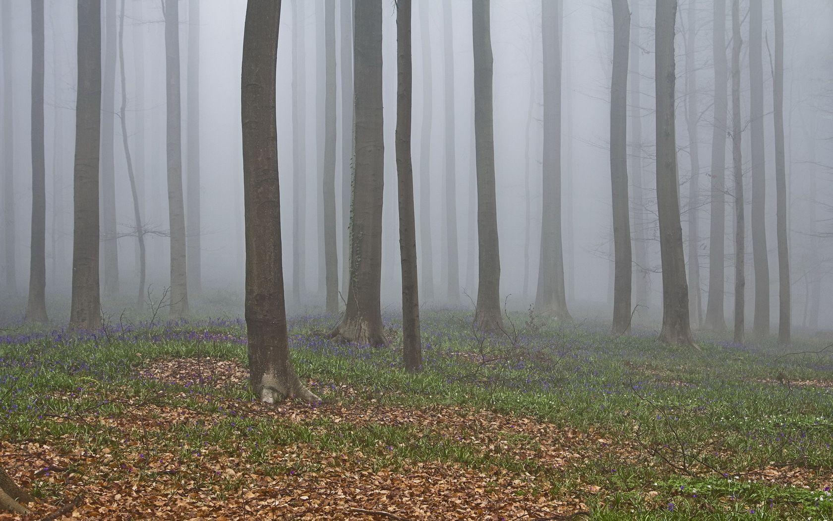 #Fog #Nature
