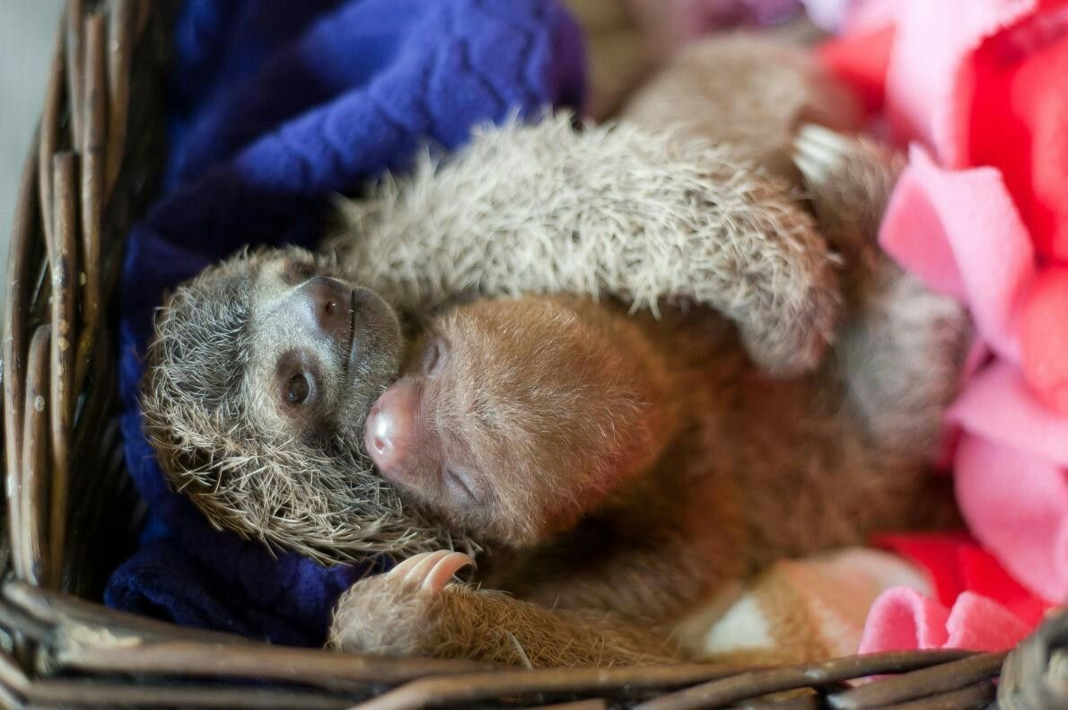 Locket and Elvis cuddle at the refuge.  PHOTOGRAPH BY SAM TRULL